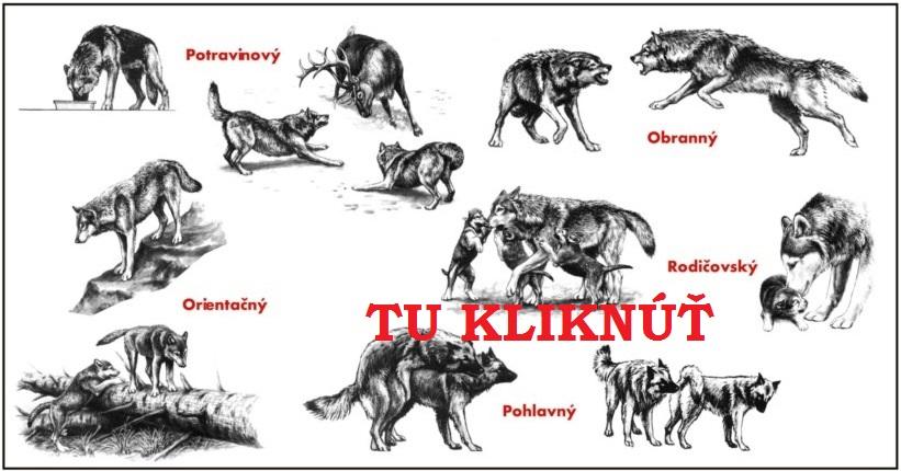 spravanie sa psov